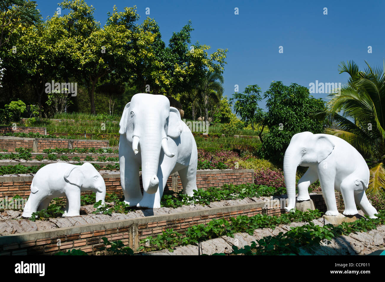 Weißer Elefant Stockfotos und  bilder Kaufen   Alamy