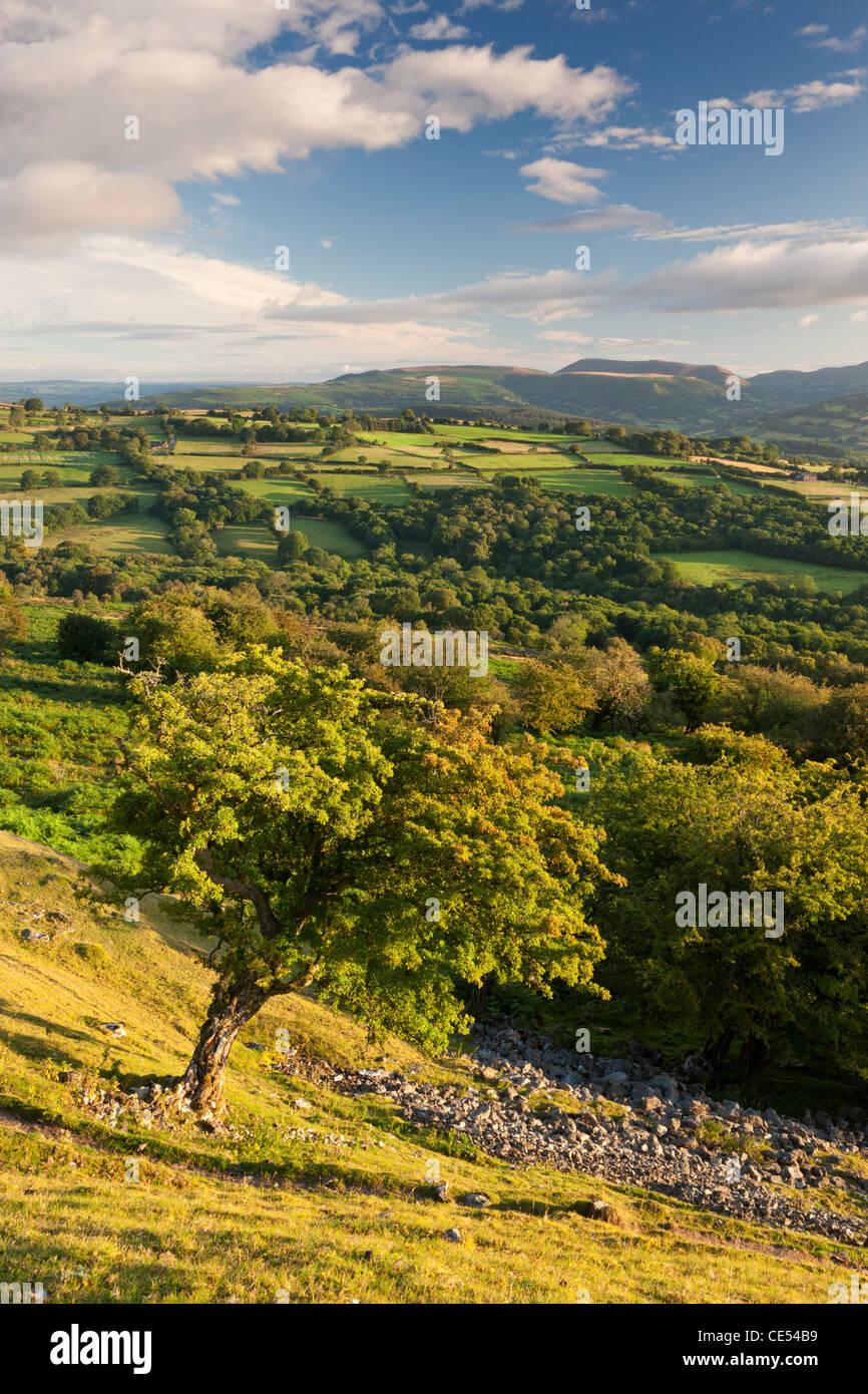 Hügelige Landschaft rund um die Usk Valley, Brecon Beacons National Park, Powys, Wales. Sommer (August) 2011. Stockbild
