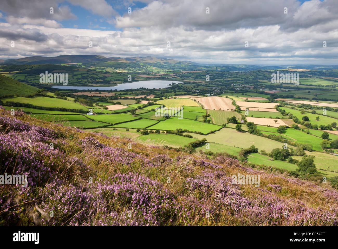Eine hügelige Landschaft der Brecon Beacons aus Heidekraut bedeckten Hänge Mynydd Llangorse, Powys, Wales. Stockbild