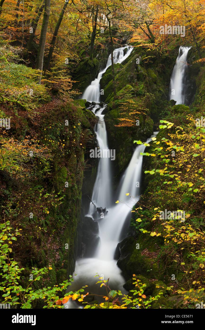 Am Stock Ghyll Force Wasserfall in der Nähe von Ambleside im Lake District, Cumbria, England. Herbst (November) Stockfoto