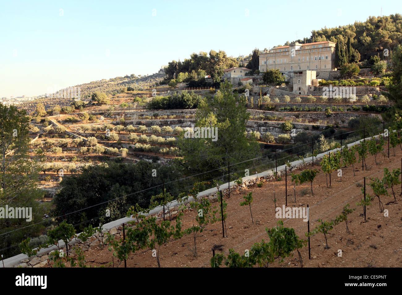 Weinberg des Weinguts Cremisan betrieben und verwaltet von der Salesianer Don Boscos Kongregation. Beit Jala bei Stockbild