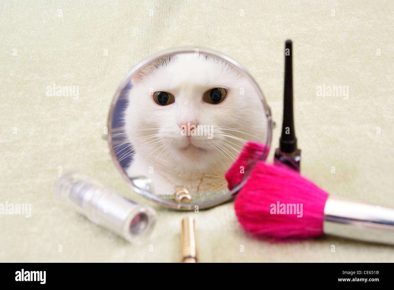 Reflexion der weiße Kätzin in kleinen Spiegel Stockbild