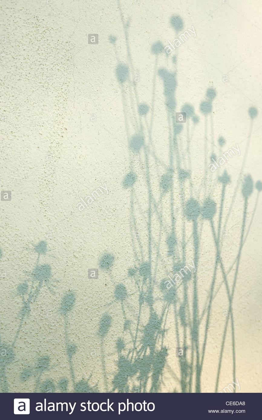 Silhouette der krautige mehrjährige Seedheads gegen Wand Stockbild