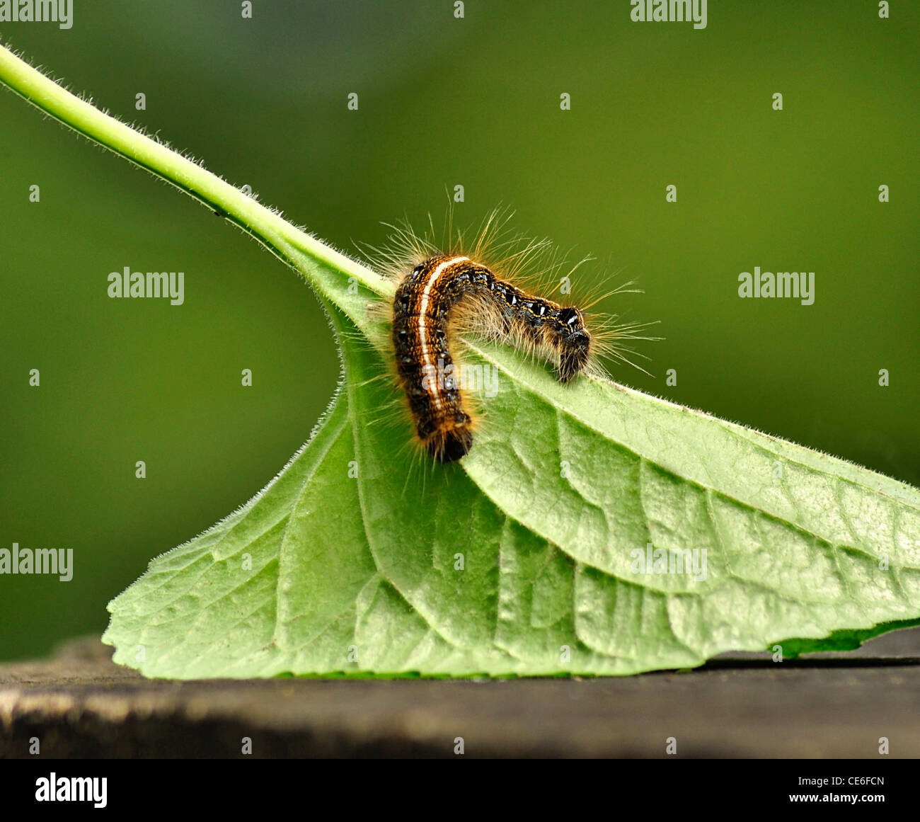 caterpillar stockfotos caterpillar bilder alamy. Black Bedroom Furniture Sets. Home Design Ideas
