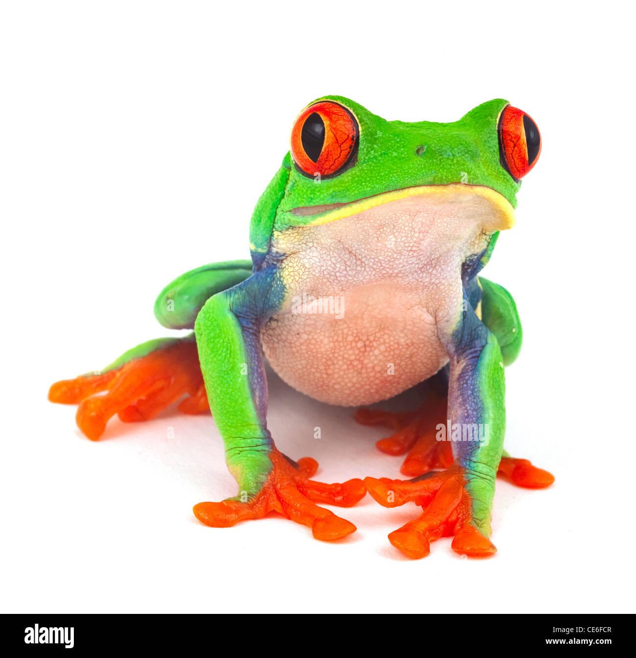 Fein Kermit Der Frosch Färbung Seite Fotos - Druckbare Malvorlagen ...