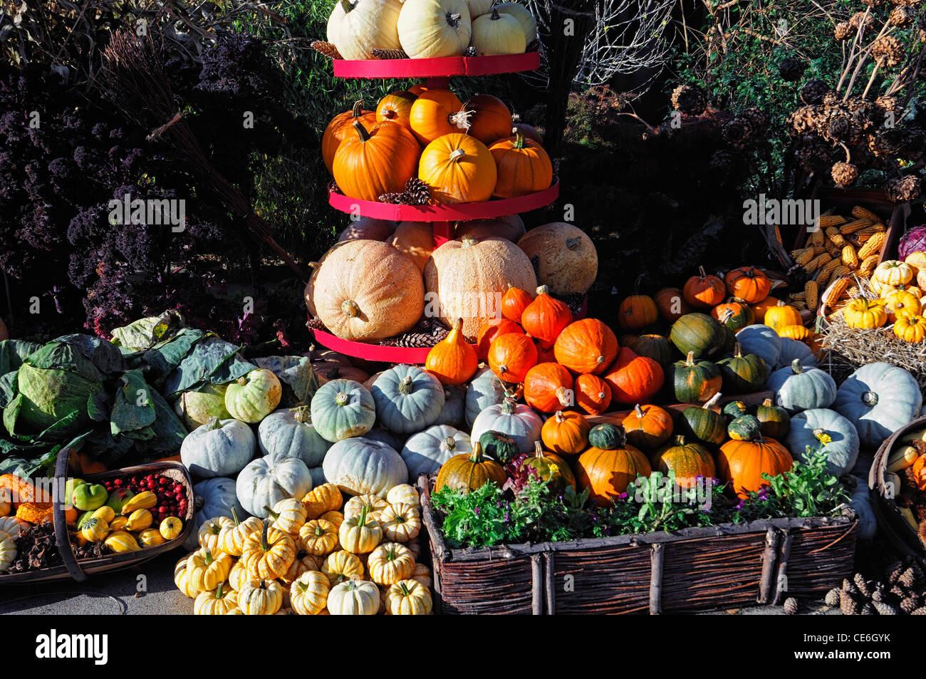 Herbst Herbstliche Herbst Ernte Essen Die Essbaren Garten Ernte