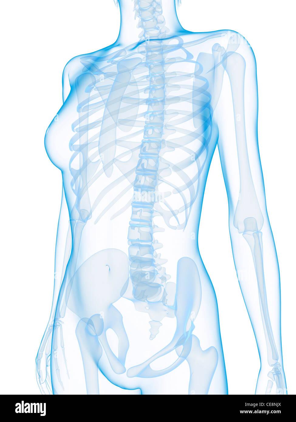 Großartig Studie Anatomie Knochen Fotos - Menschliche Anatomie ...