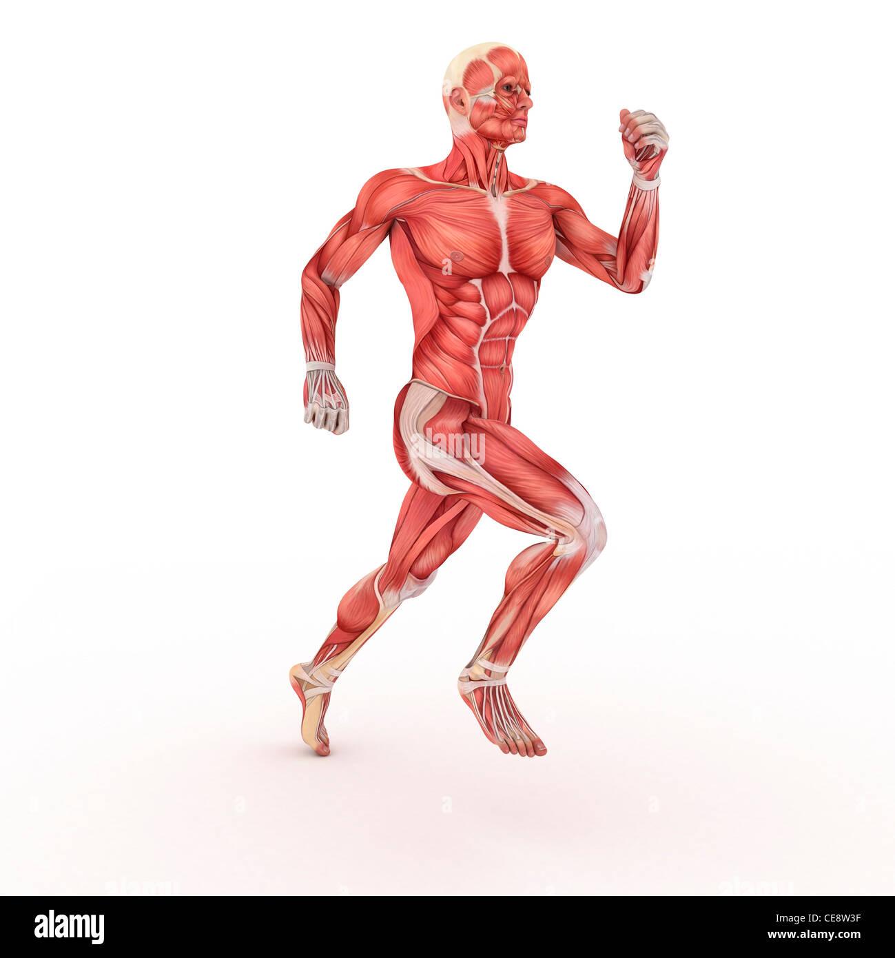 Großartig Muskelanatomie Weiblich Fotos - Anatomie Ideen - finotti.info