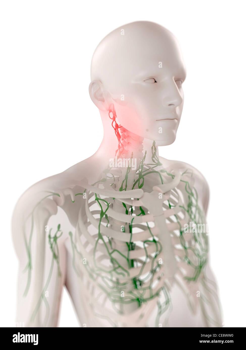 Geschwollene lymphknoten brust | Lymphknoten überprüfen