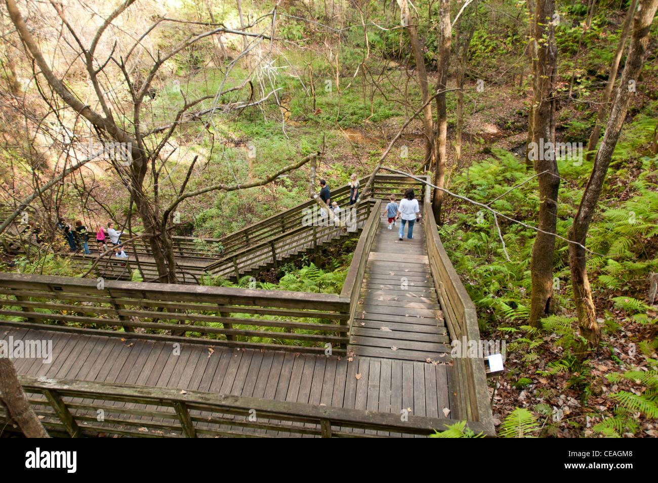 Des Teufels Millhopper geologischen Staatspark, Gainesville, Florida, Vereinigte Staaten von Amerika, USA, Nordamerika Stockbild