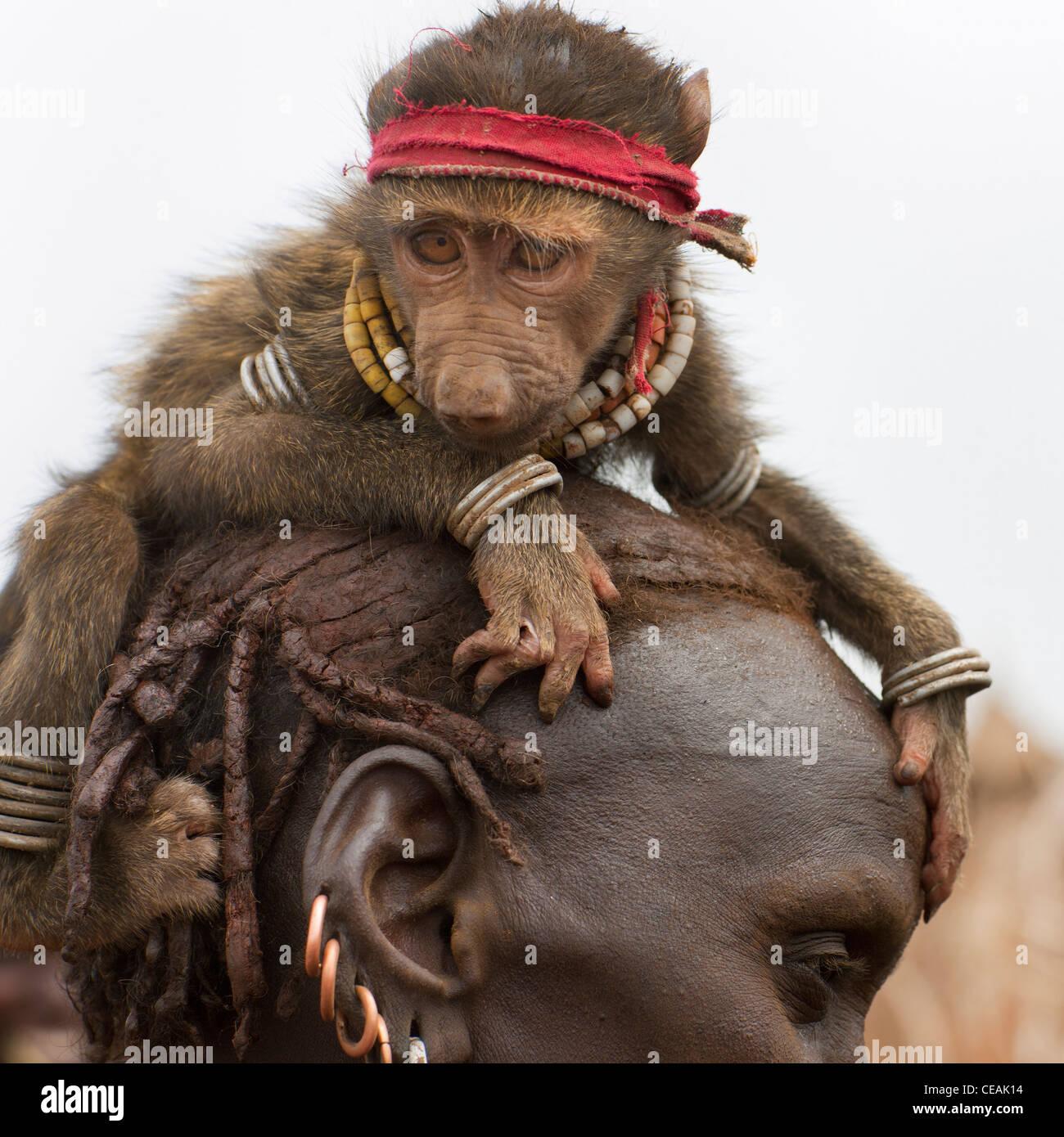 Monkey Pet Stockfotos Monkey Pet Bilder Alamy
