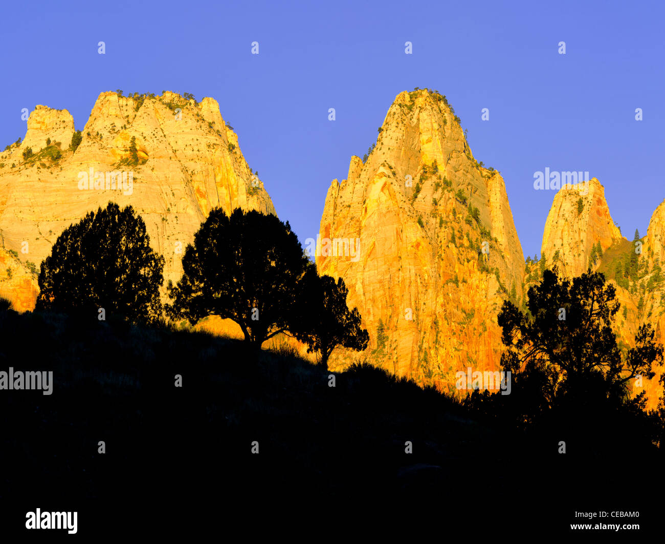 Silhouette Bäume und Tempel und Türme der Jungfrau Maria. Zion Nationalpark, Utah Stockbild