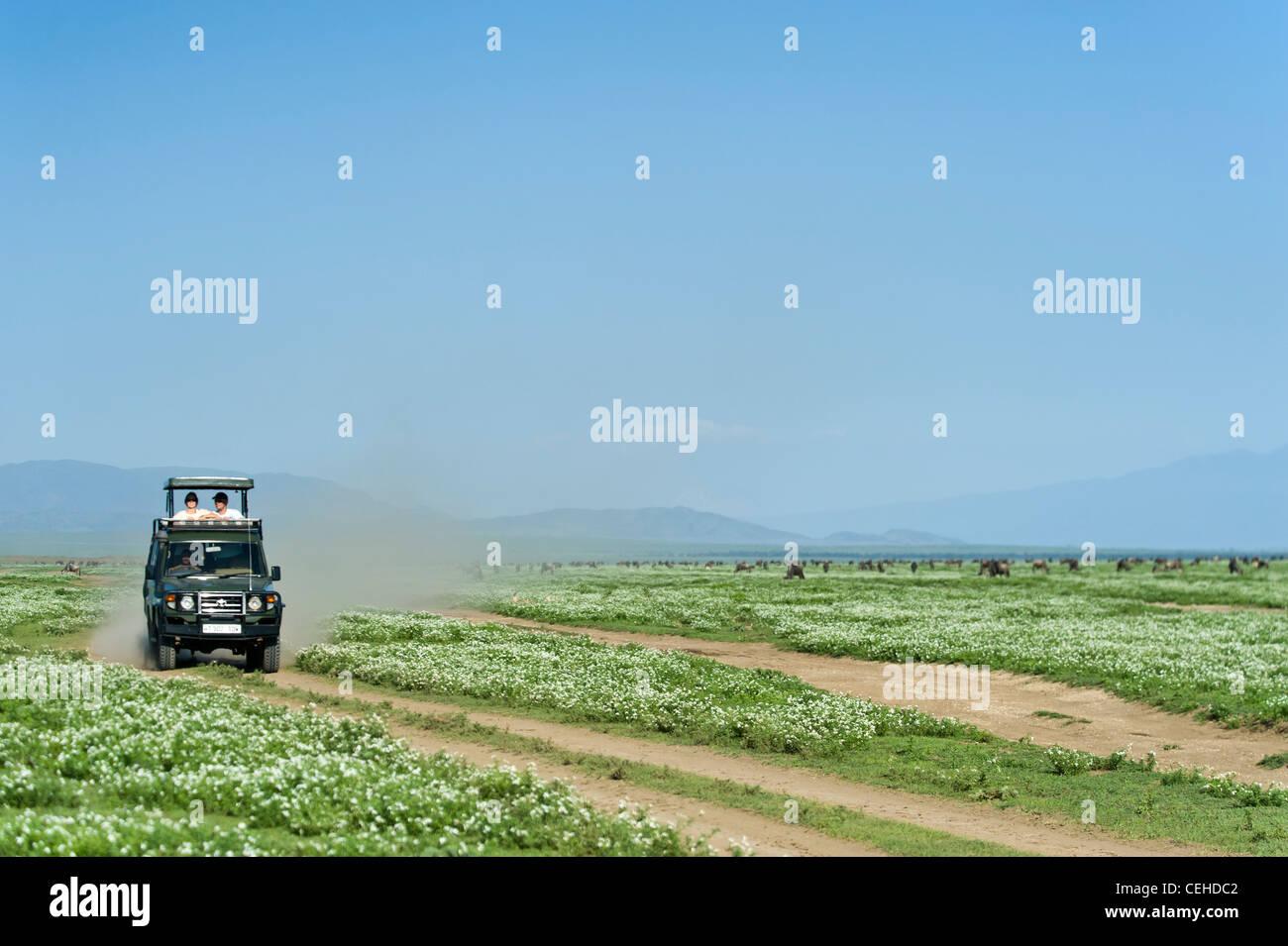 Vorbei die Gnus Migration am Ndutu in Ngorongoro Conservation Area - Tansania Safari-Fahrzeug Stockfoto
