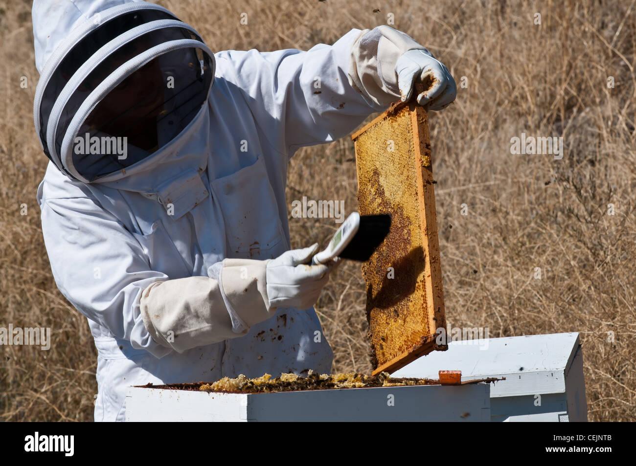 Ein Hobby-Imker in Stevensville, Montana beginnt sich zu öffnen die ...
