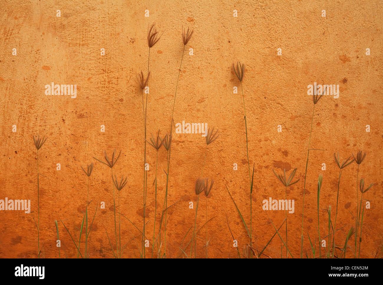 Wand und Pflanzen Stockbild