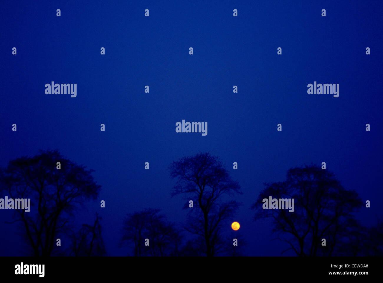 Die Erde-Mond auf einem Baum gesäumt Horizont in der Nacht. Blau-Umgebung Stockfoto