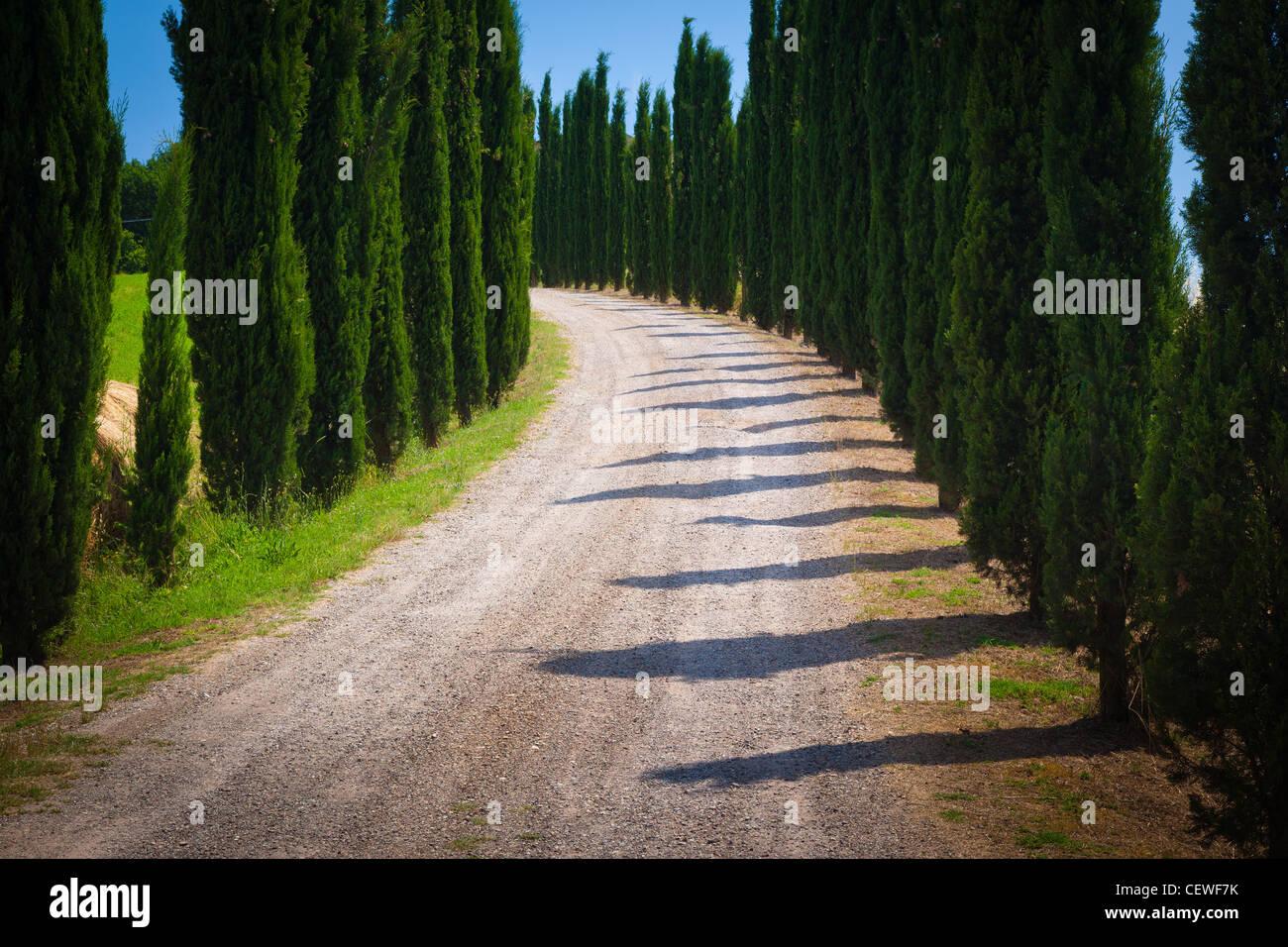 Straße, gesäumt von Zypressen in der Toskana Stockbild
