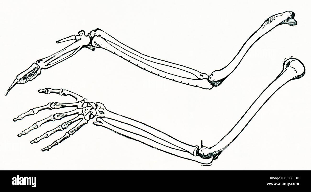 Berühmt Sphenoid Flügel Anatomie Ideen - Anatomie Von Menschlichen ...