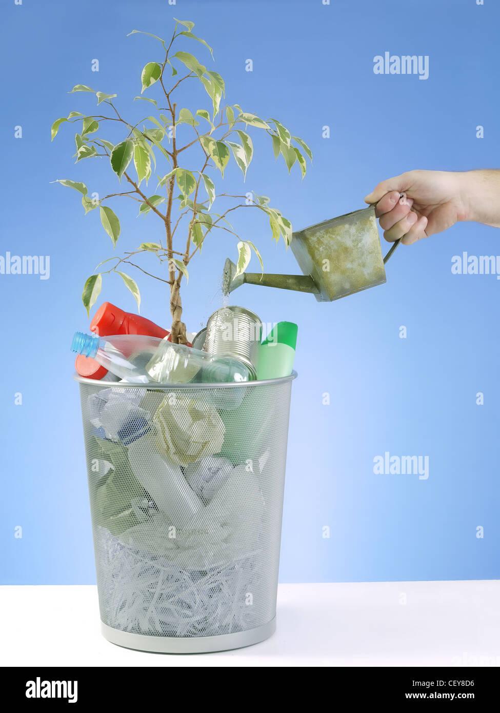 Pflänzchen wachsen in Papierkorb voller Hausmüll mit Wasser begossen werden kann auf blauem Hintergrund Stockbild