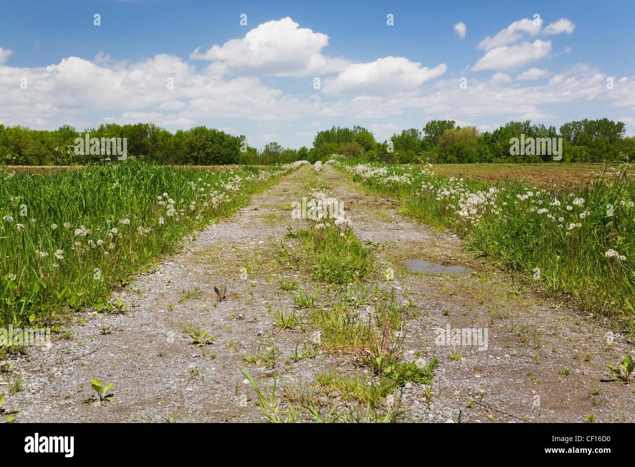 Feldweg durch einen landwirtschaftlichen Bereich im Frühjahr; Quebec Kanada Stockbild