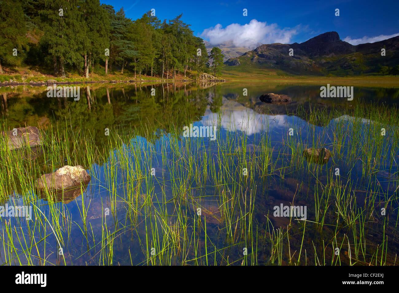 Blick über Blea Tarn mit Blick auf die Langdale Pikes. Stockfoto
