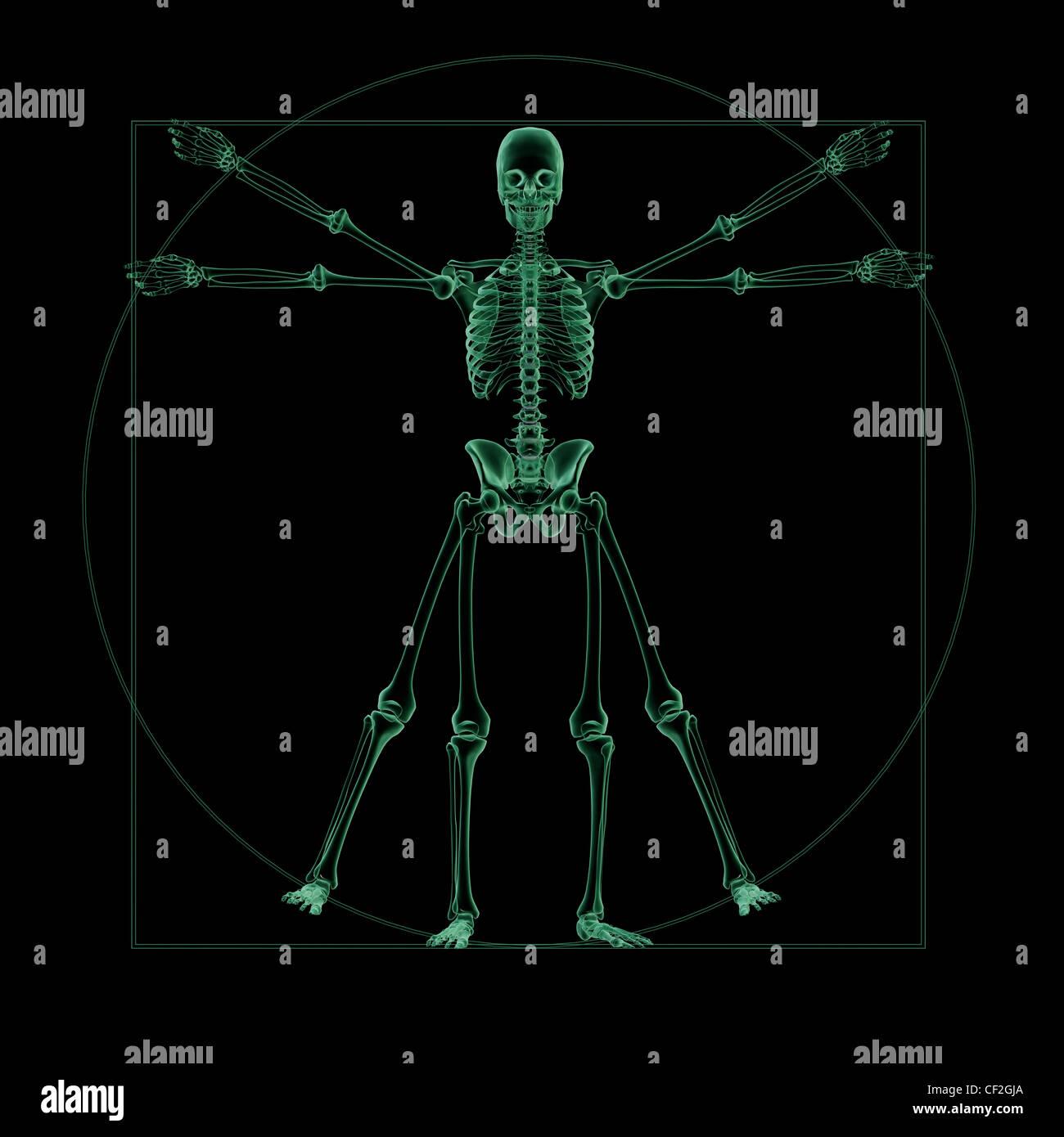 Röntgen Skelett-Struktur des menschlichen Arms Stockfoto, Bild ...