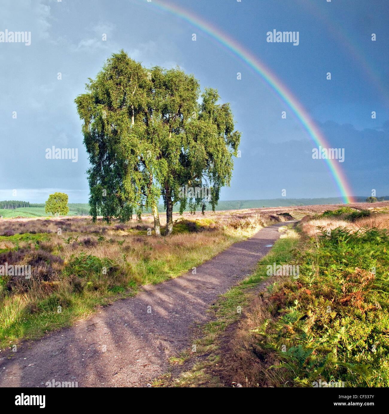 Regenbogen über Herz von England Weg Cannock Chase Country