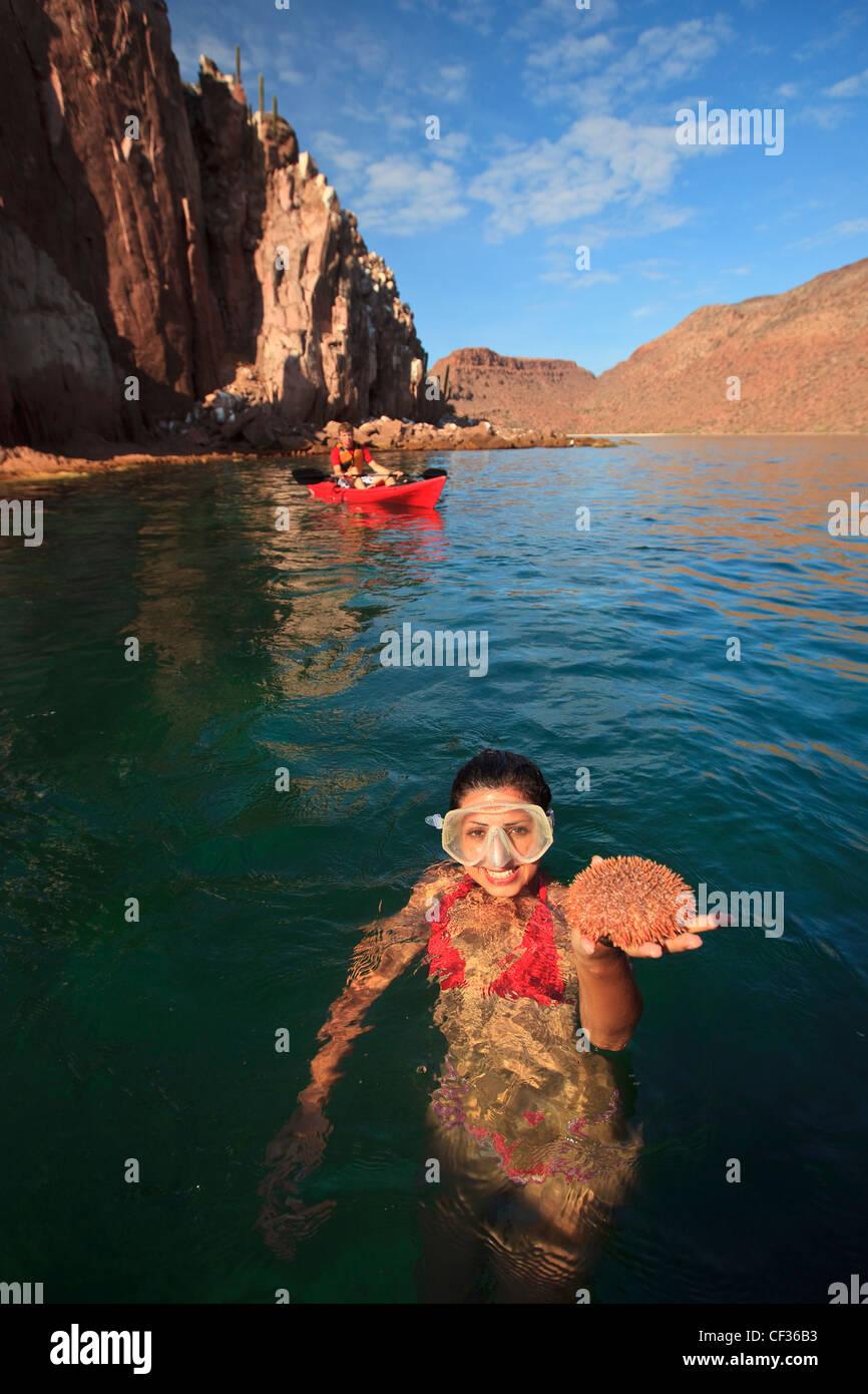 Ein Tourist mit marinen Lebens In der Hand In das Wasser auf der Insel Espiritu Santo; La Paz, Baja California Mexiko Stockfoto