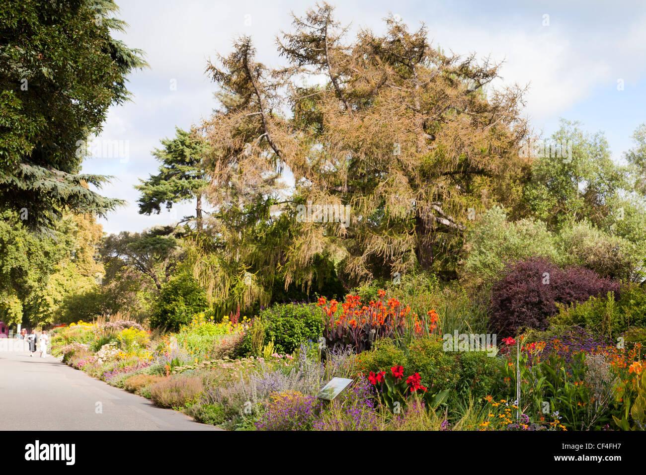 Die krautigen Grenze Hagley Park, Christchurch, New Zealand, im Spätsommer. Stockbild