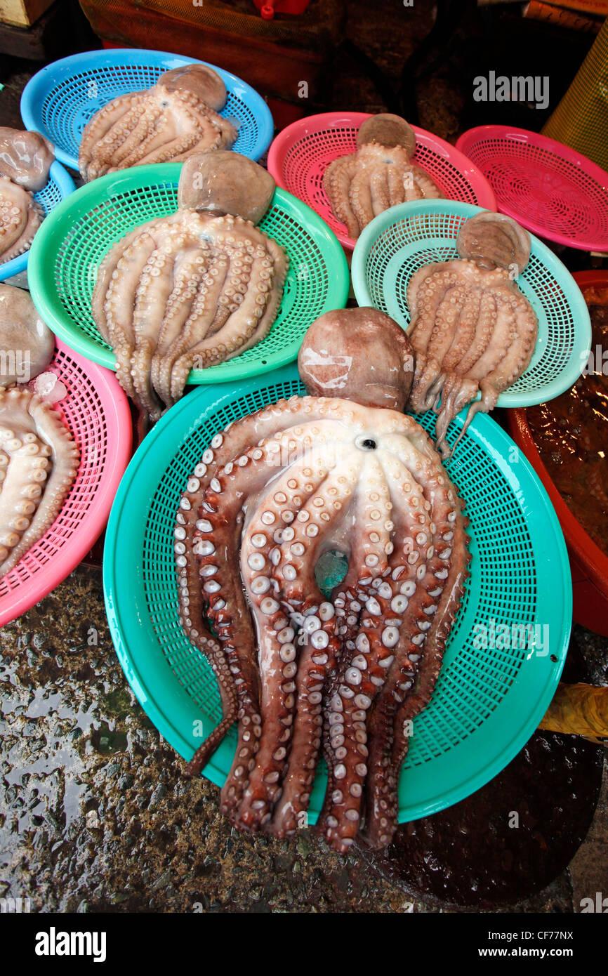 Tintenfisch mit Tentakeln und Sauger in einer Meeresfrüchte-Anzeige im Jagalchi Fischmarkt in Busan, Südkorea Stockbild