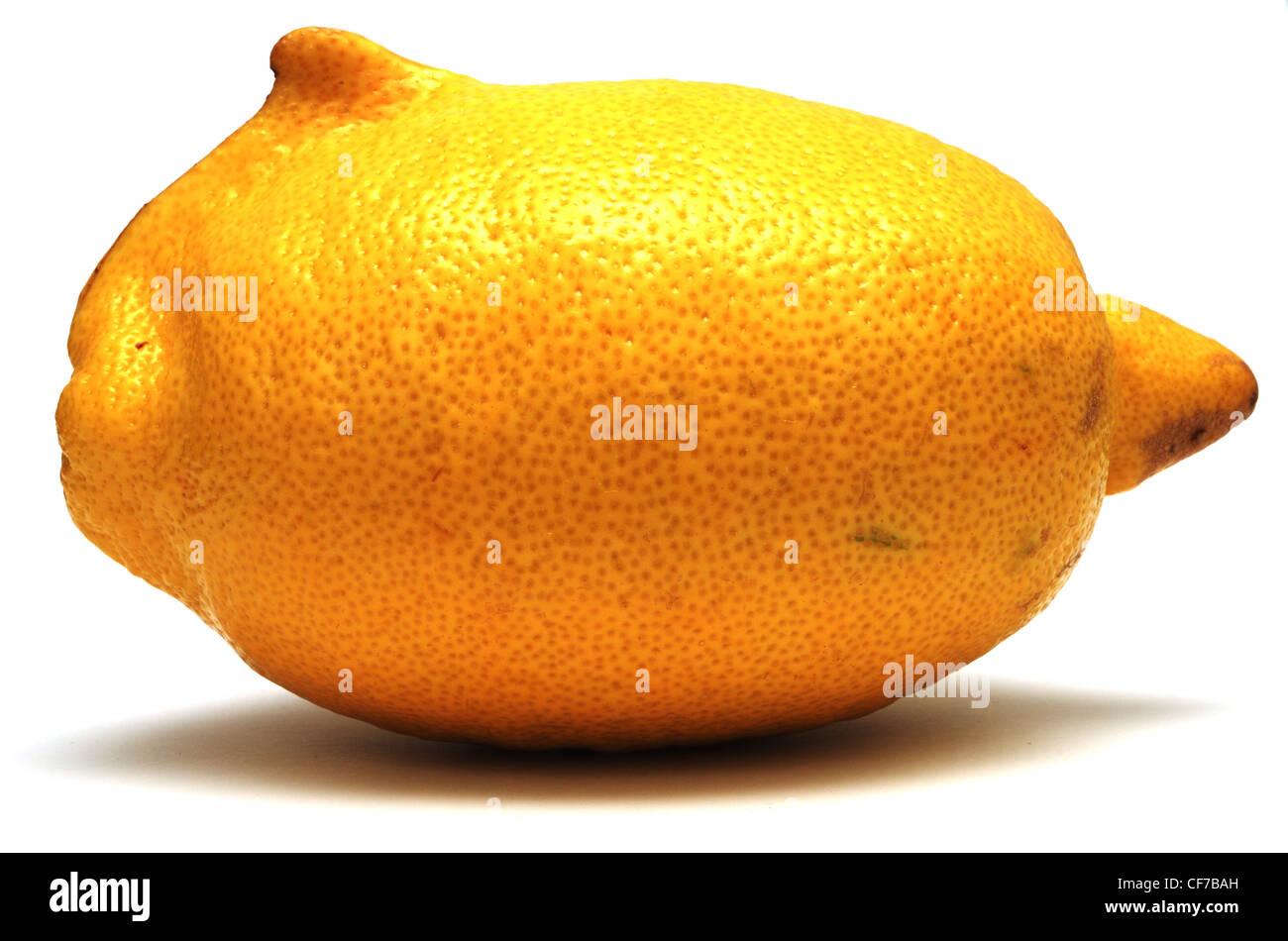 frische gelbe Zitrone ungewöhnliche Form auf weißem Hintergrund Stockbild