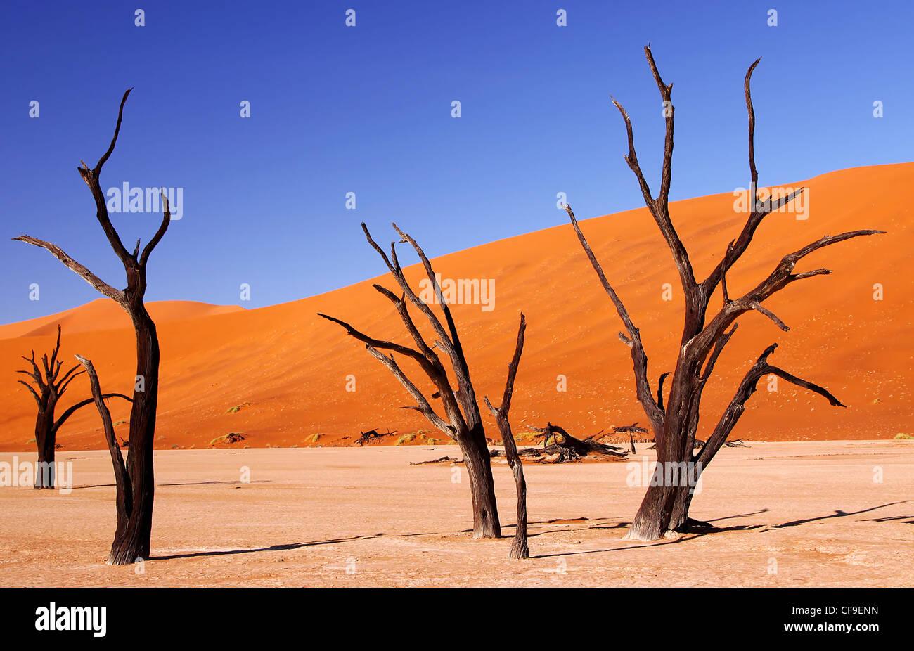 Dead Vlei, Namibia, Namib-Wüste Stockfoto