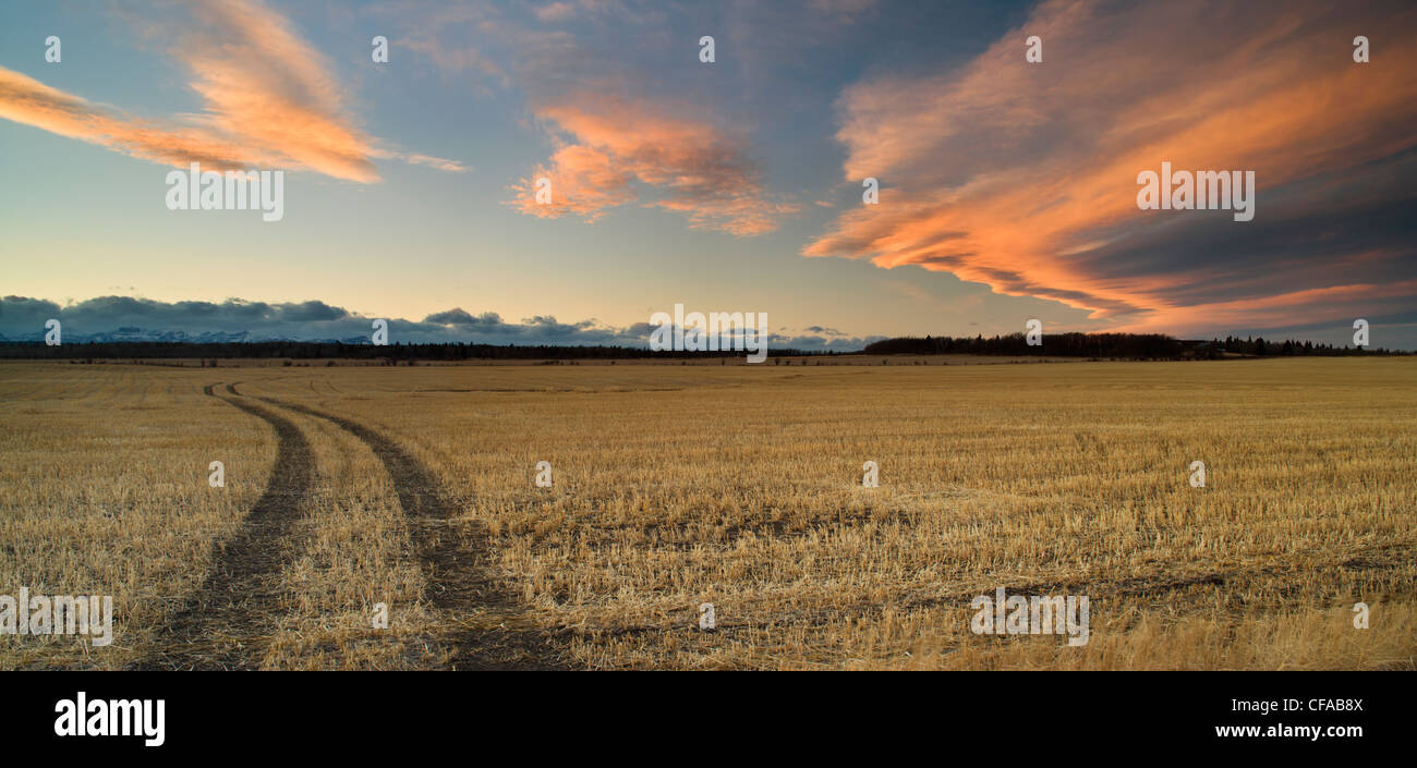 Stoppelfeld und Chinook arch Wolken in der Nähe von Cochrane, Alberta, Kanada. Stockbild
