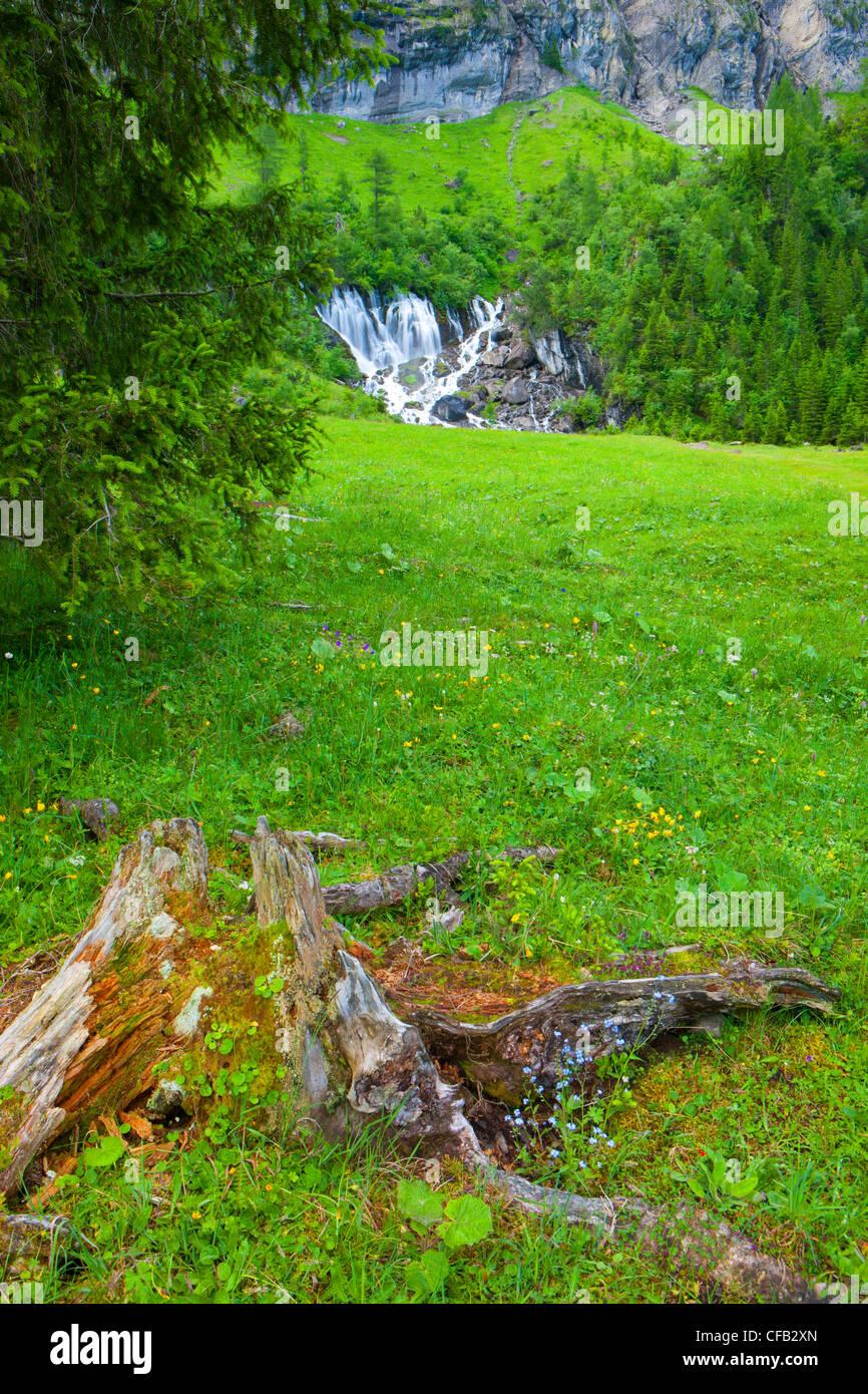 Sieben Brunnen, Sieben Brunnen, Schweiz, Kanton Bern, Berner Oberland, Simmental, Weide, Weide, Holz, Wald, Frühling, Stockbild