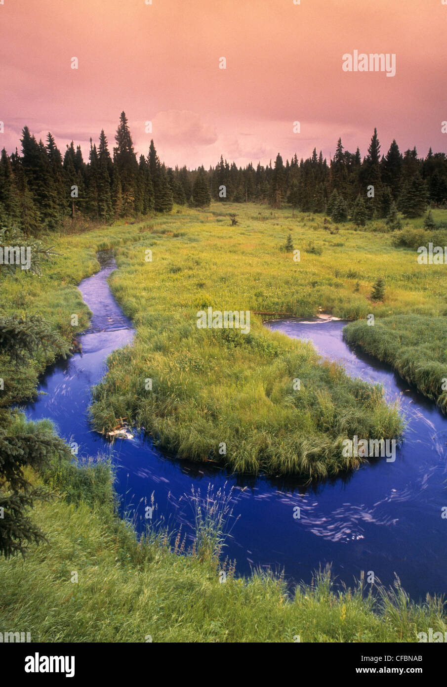 Entlang dem borealen Island Trail Riding Mountain National Park, Manitoba, Kanada Stockbild