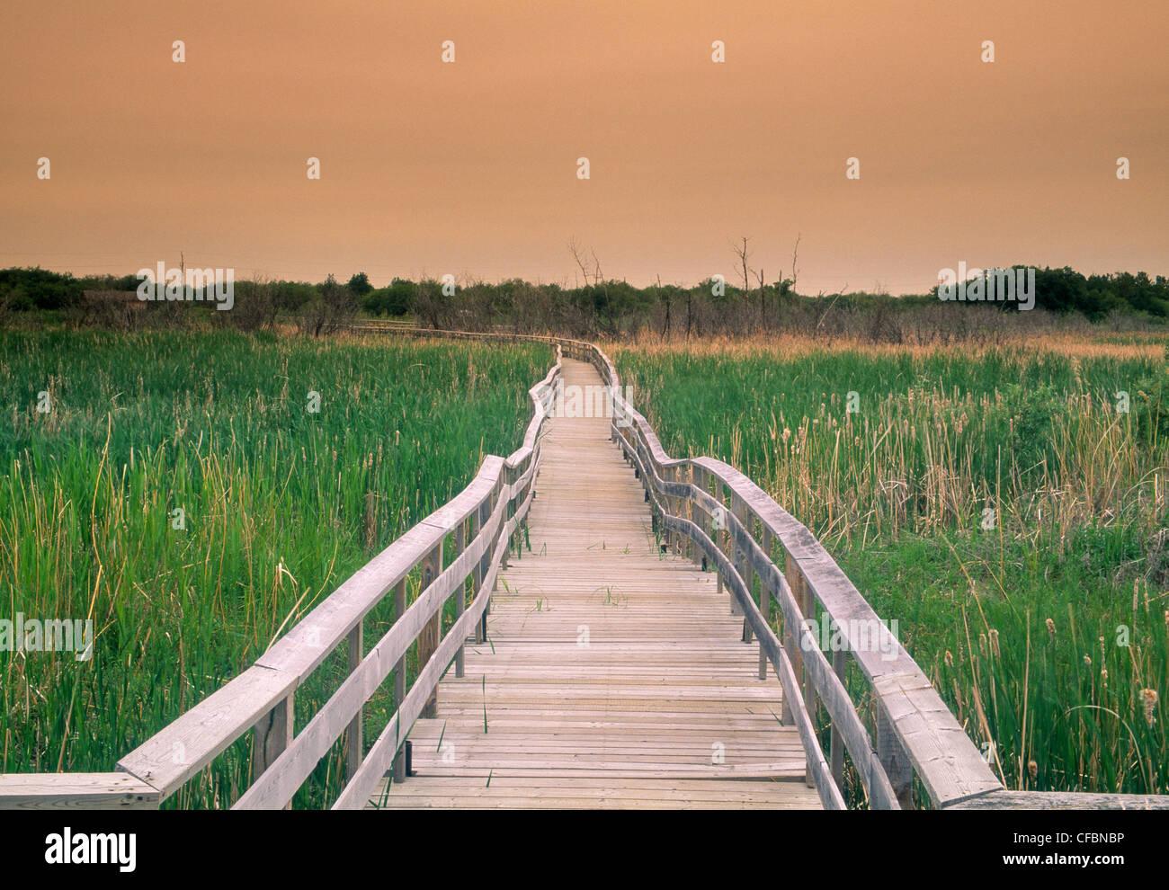 Promenade-Trail in Fichte Woods Provincial Park, Manitoba, Kanada Stockbild