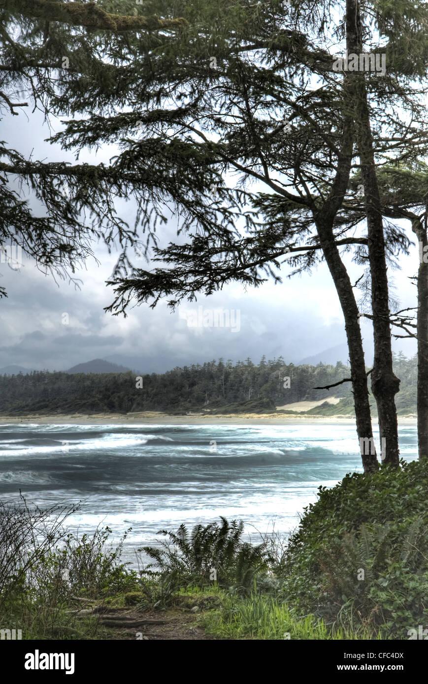 Long Beach, Tofino Wellen umrahmt von Bäumen Stockbild