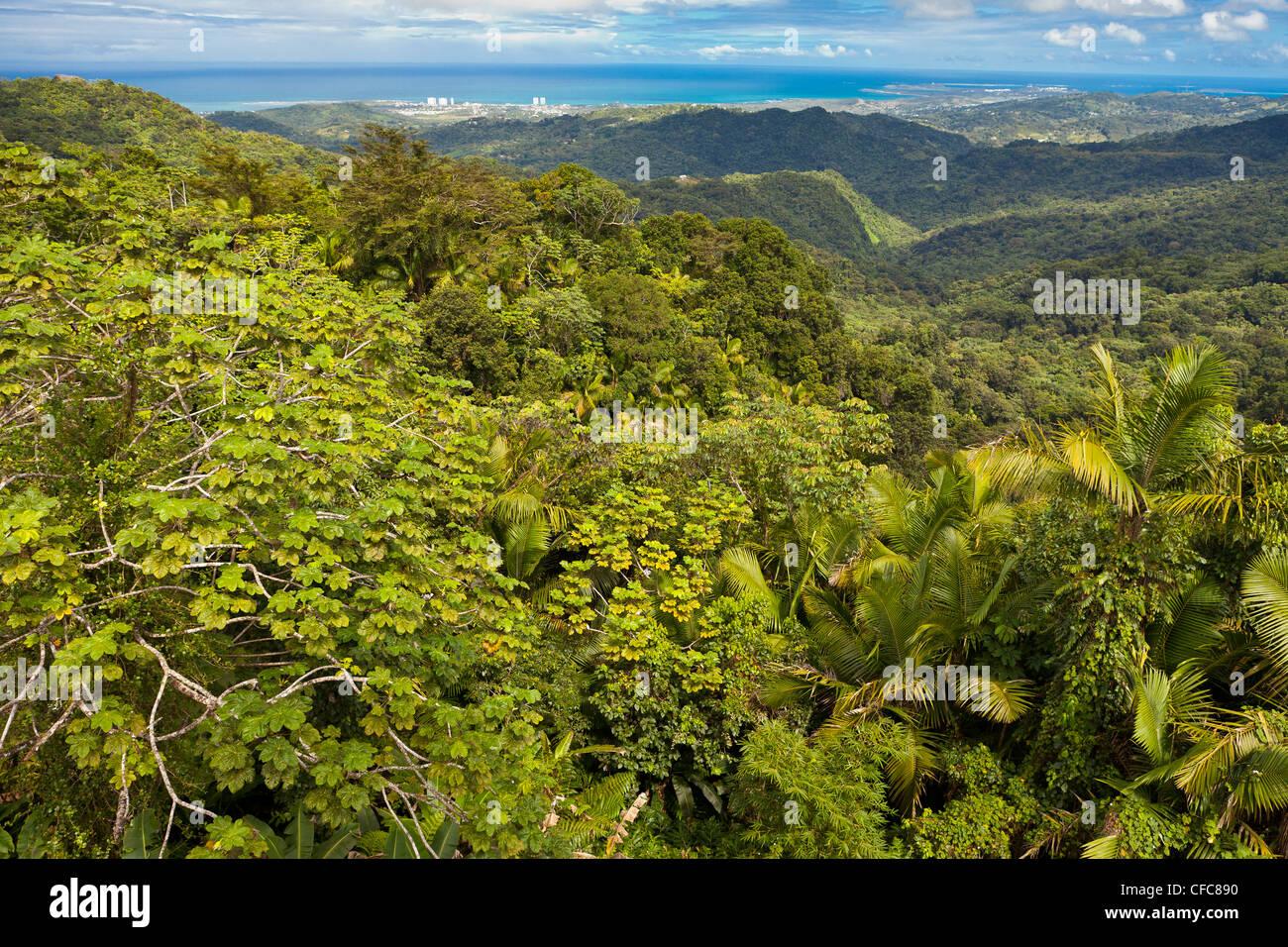 EL YUNQUE NATIONAL FOREST, PUERTO RICO - Regenwald Dschungel Baldachin Landschaft und Küste in der Nähe Stockbild