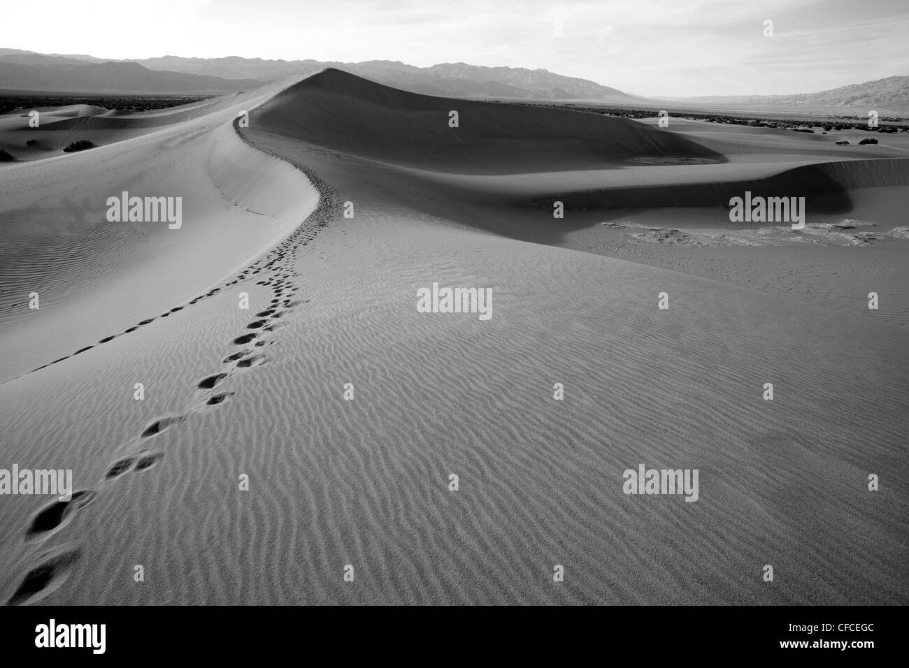 Mesquite flache Sanddünen im Death Valley, Kalifornien, USA Stockfoto