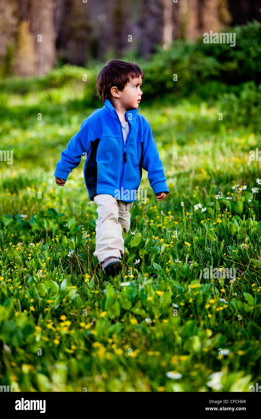 ein kleiner Junge geht durch eine Wiese mit Wildblumen am Squaw Pass. Stockbild