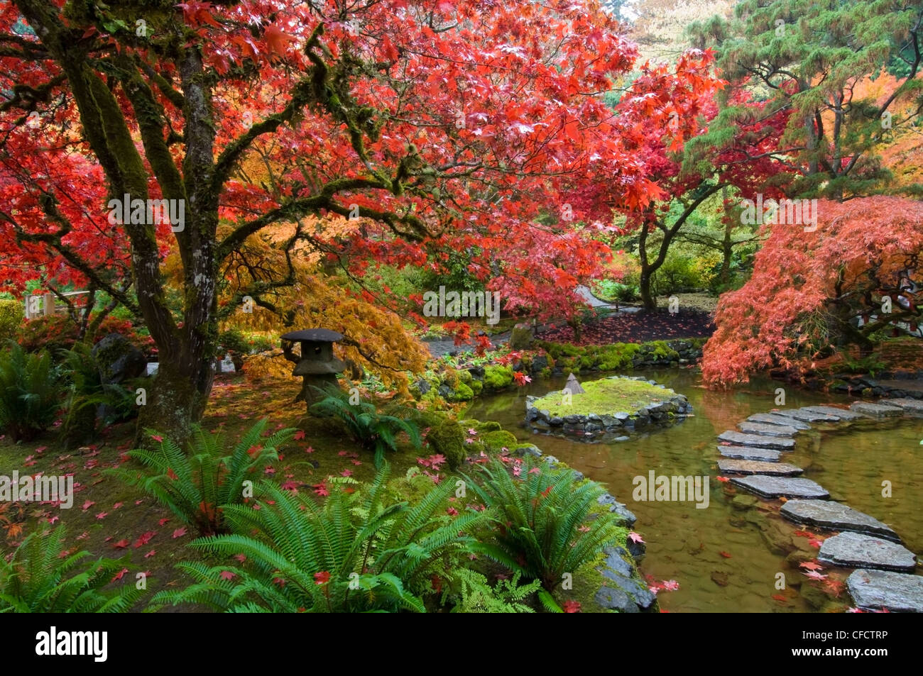 japanischer garten im herbst am butchart gardens victoria vancouver island british columbia. Black Bedroom Furniture Sets. Home Design Ideas
