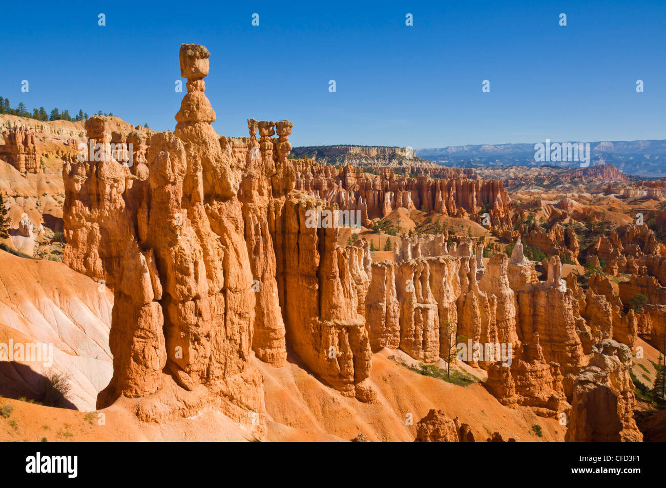 Der Hammer des Thor, Bryce-Canyon-Nationalpark, Utah, USA Stockbild