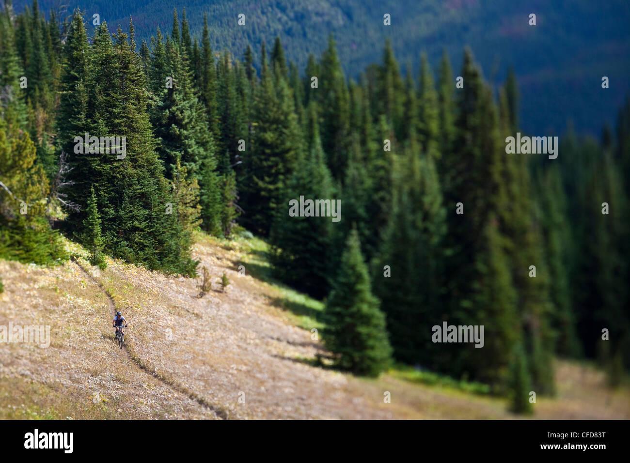 mittleren gealterten männlichen Mountainbiker fährt perfekt Stockfoto