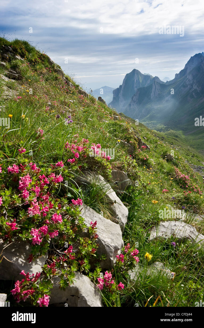 Blühende Wiese am Rotsteinpass, Alpsteingebirge, Säntis, Appenzeller Land, Schweiz, Europa Stockbild