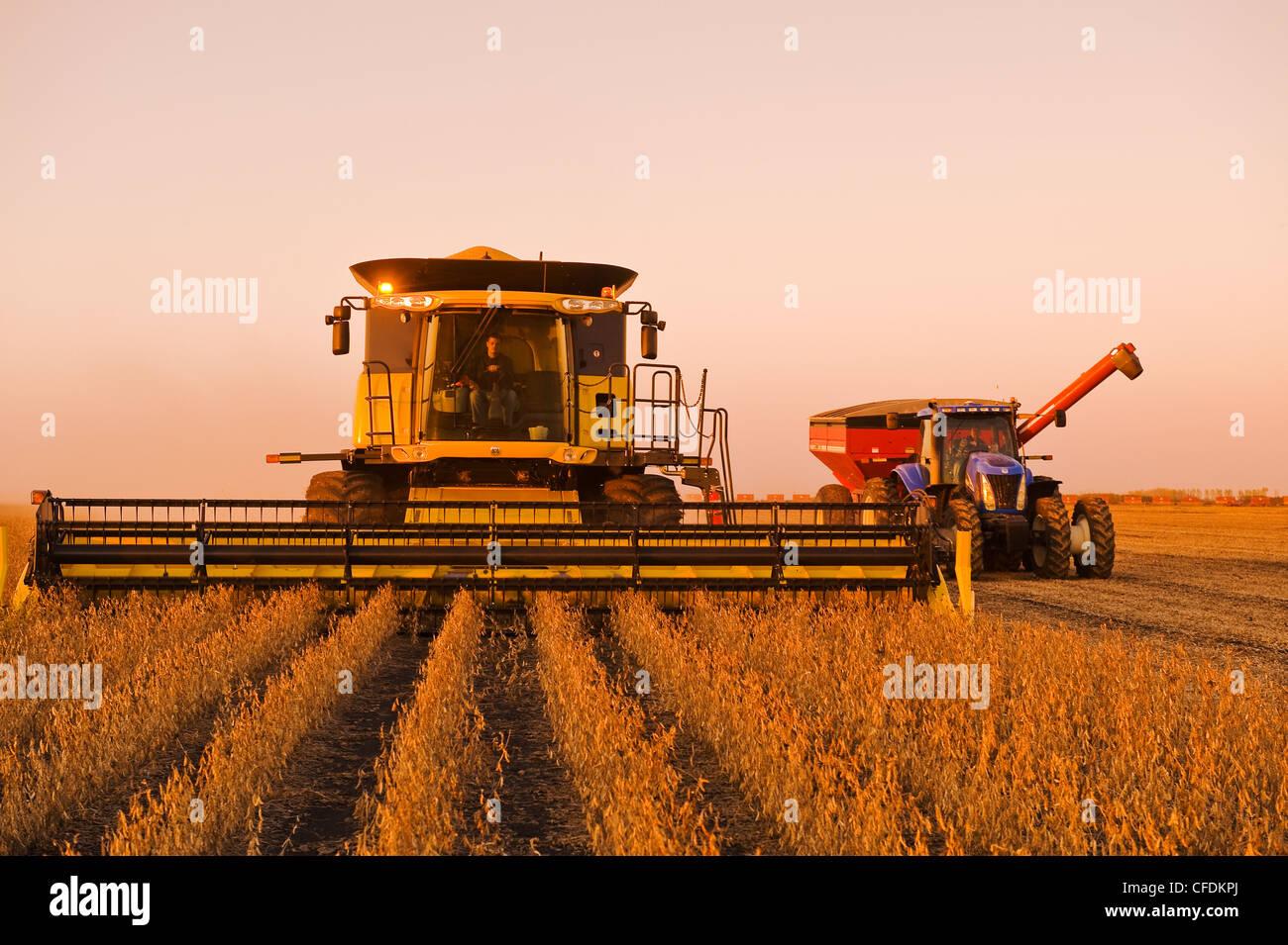 Ein Mähdrescher und Getreide Wagen während der Soja-Ernte, in der Nähe von Lorette, Manitoba, Kanada Stockbild