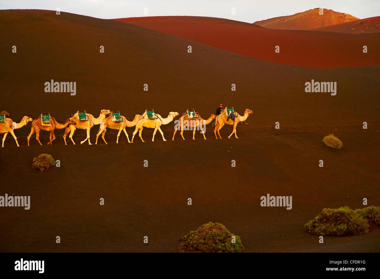 Ausflug mit dem Kamel, Vulkan, zu besuchen, Nationalpark Timanfaya, Lanzarote, Kanarische Inseln, Spanien, Europa Stockbild
