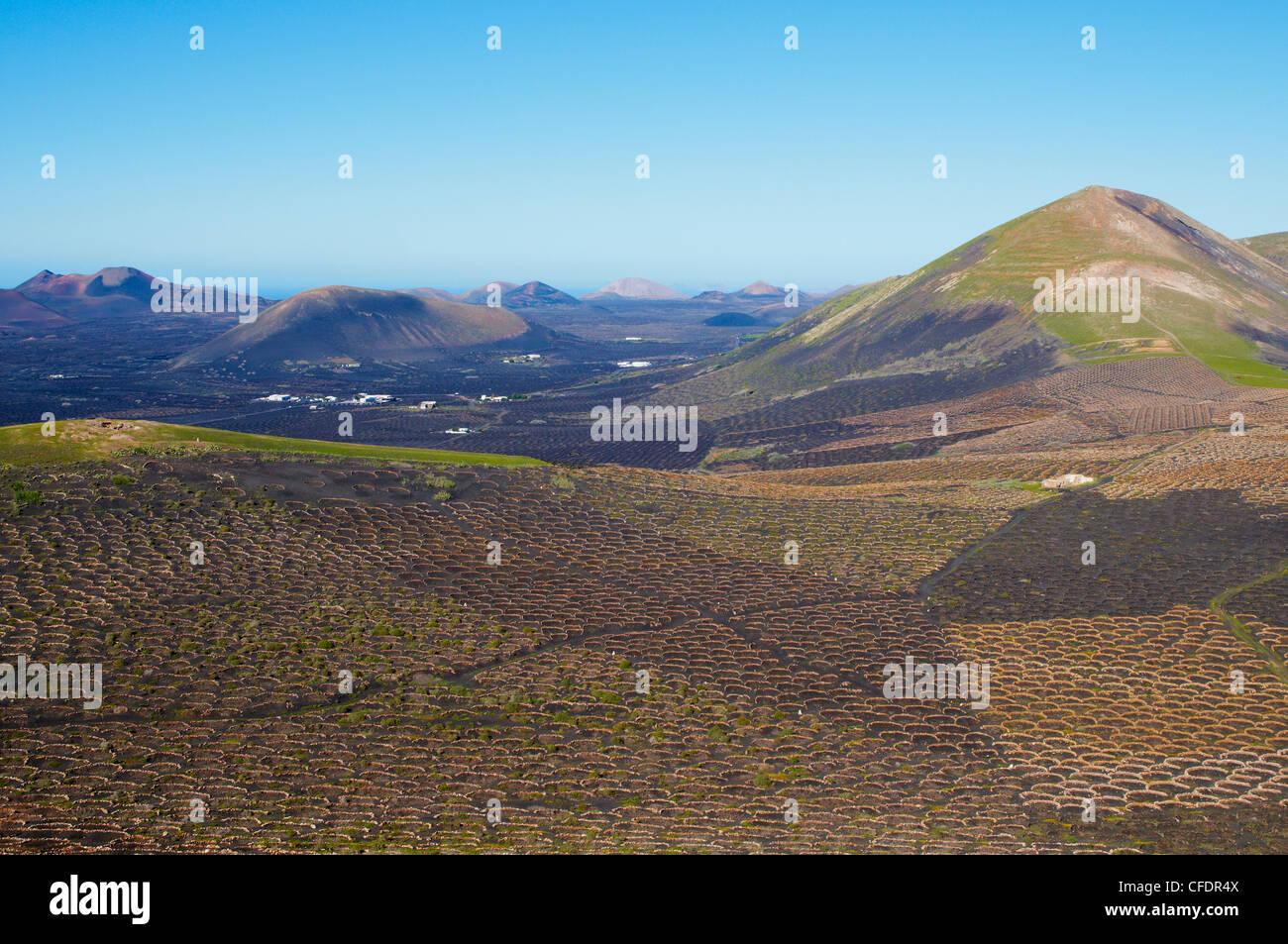 Weinberg an der Lava, Biosphärenreservat, Lanzarote, Kanarische Inseln, Spanien, Europa Stockbild