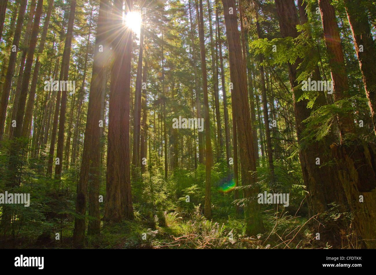 Sonne Gipfeln üppig grünen Regenwald in der Nähe von Shelter Stockbild