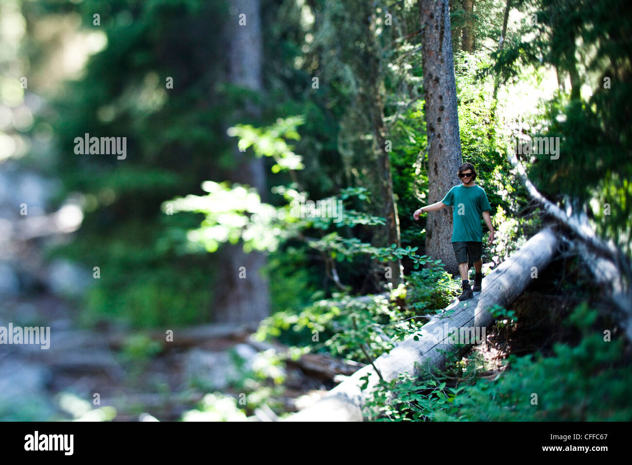 Ein junger Mann wandern geht über einen umgestürzten Baumstamm in Wyoming. Stockbild