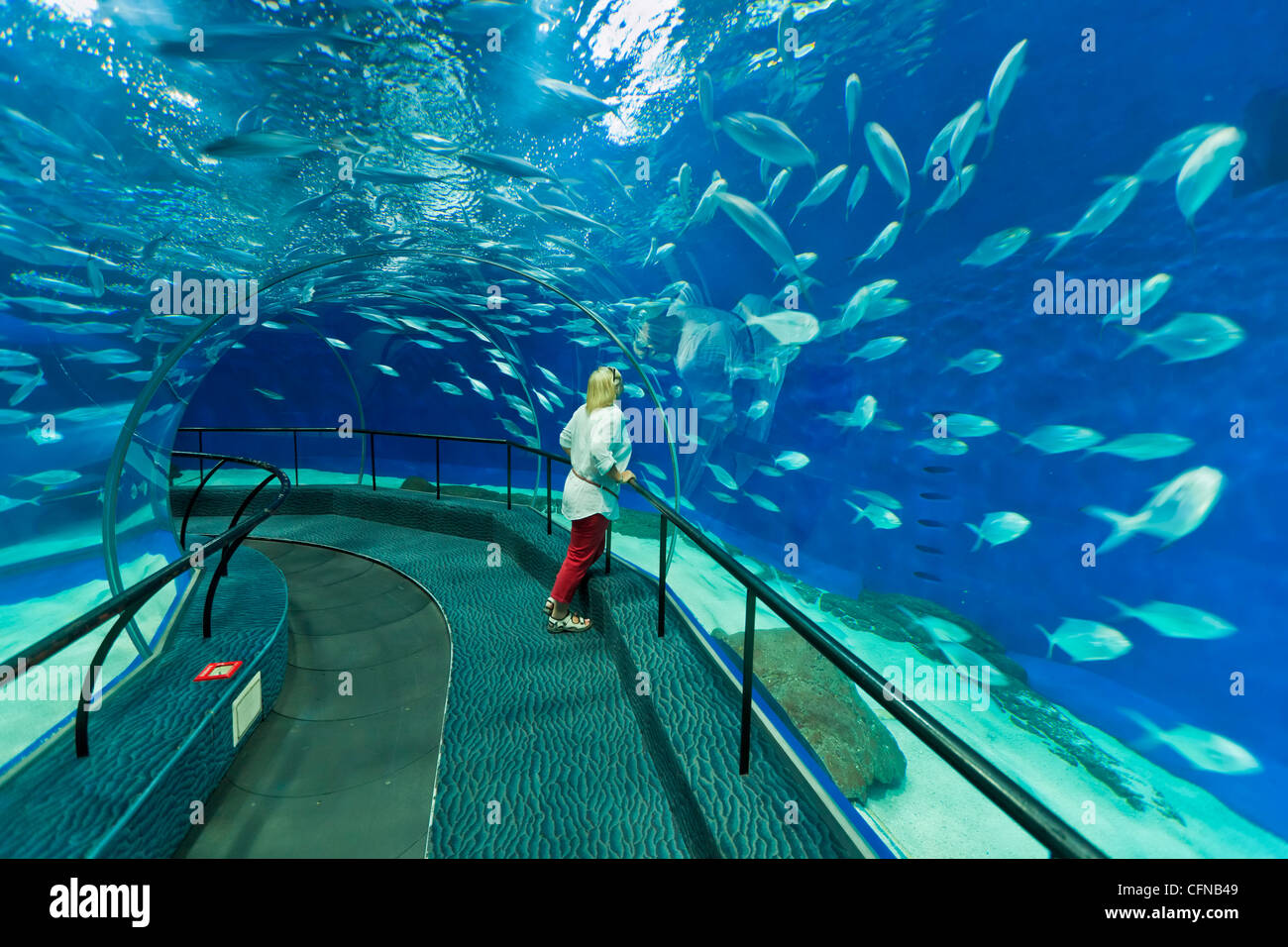 Weibliche Touristen am Ocean Aquarium, Shanghai, China, Asien Stockbild